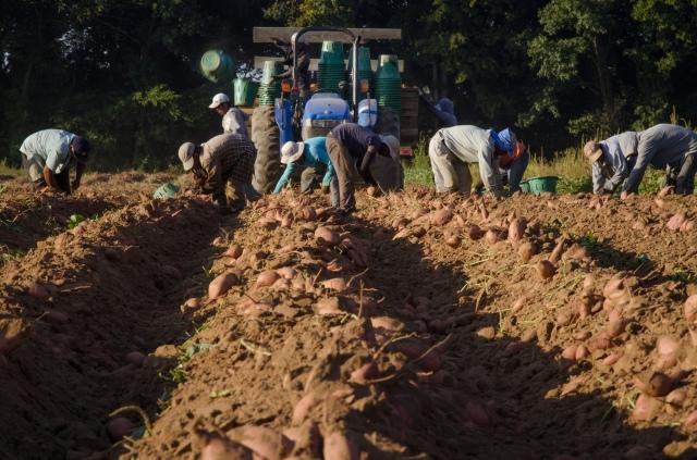 Migrant farm workers 2 USDA